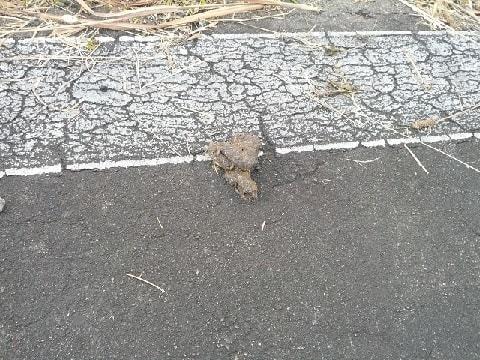 路上の猫糞
