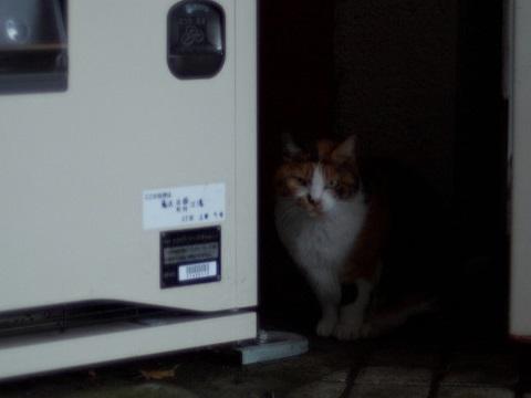 自動販売機の野良猫の写真