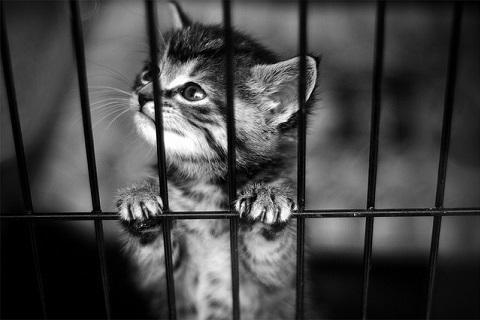 里親を待つ仔猫の写真