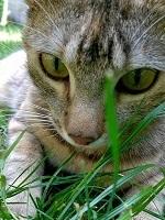 草に興味津々