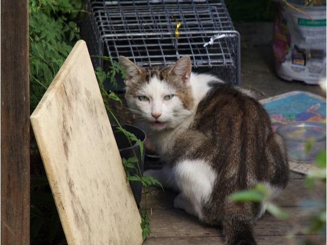 野良猫駆除、捕獲、保健所送りは...