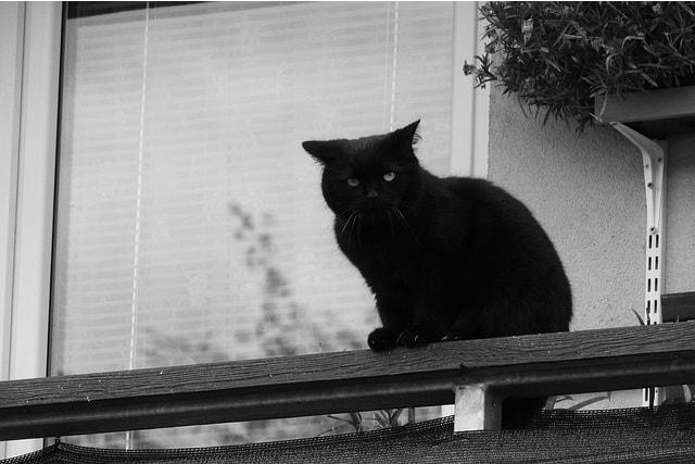 ベランダ 対策 猫